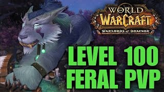 Warlords of Draenor (Beta): Level 100 Feral Druid PvP - First Look Gameplay